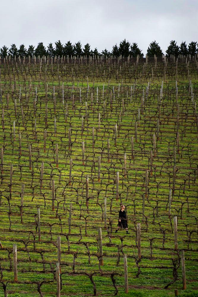 Sierra Reed in the Vineyard